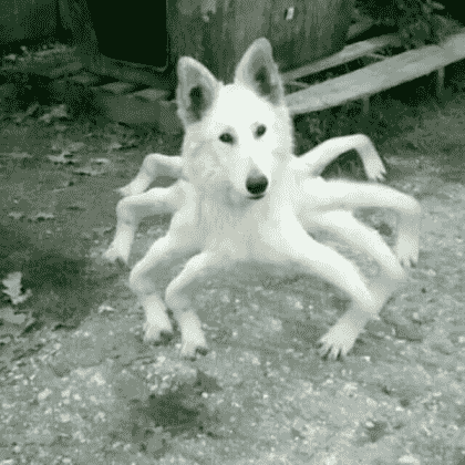 Doge Spider in Roblox