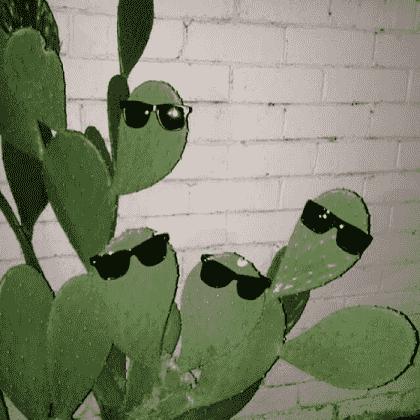 Cactus plant in Roblox