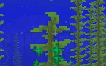 minecraft kelp
